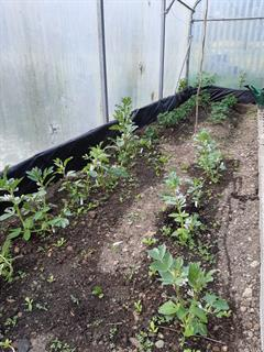 Transition Year Horticulture